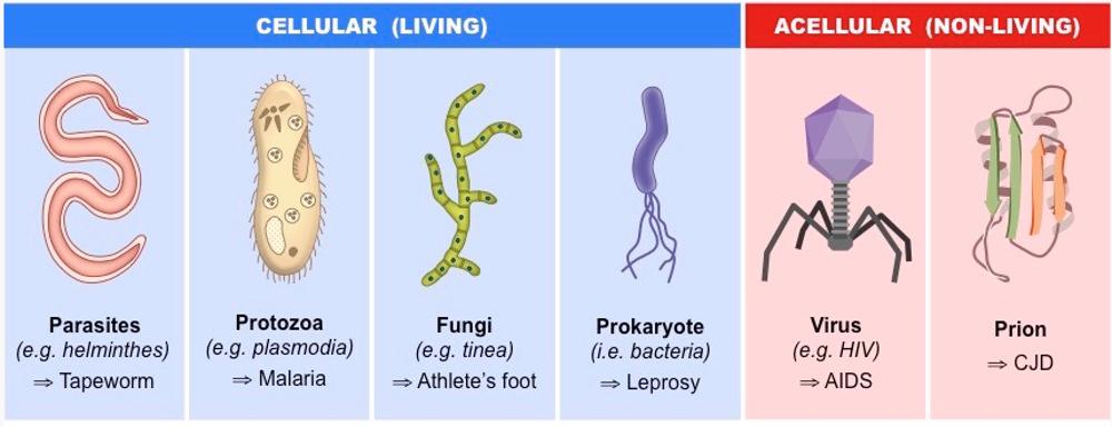 Arteriosklerose Neue Forschungsergebnisse